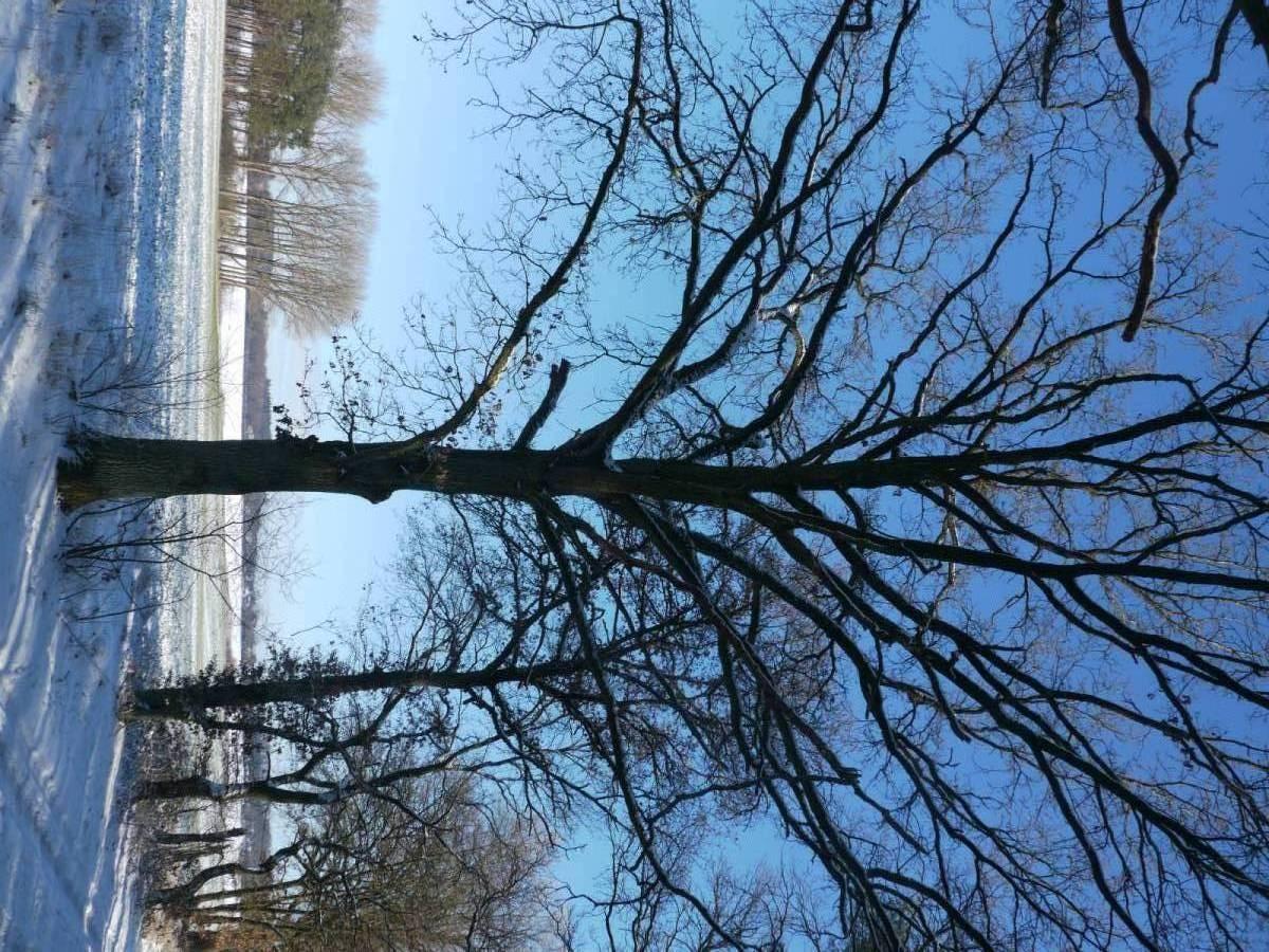 schöner Baum und Schneelandschaft