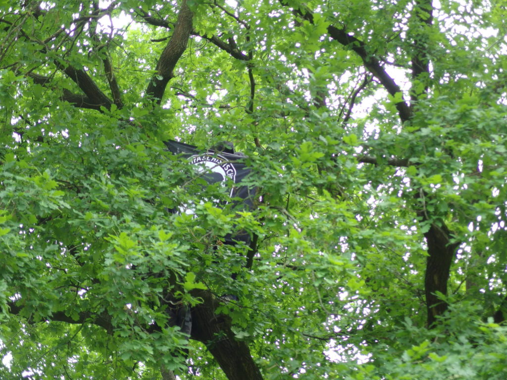 Antifa-Fahne im Baum, schwer zu sehen