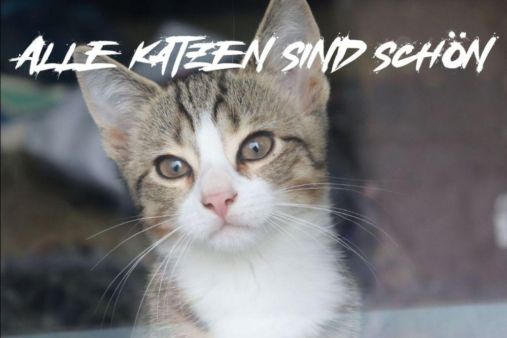 Alle Katzen sind schön – Solikalender